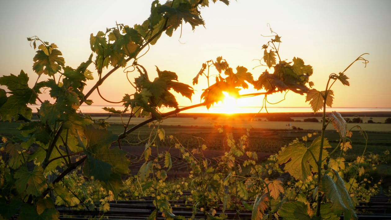 Discover the French Champagne Wine Region