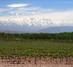 The Best winery in Salta you must visit !