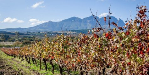 Discover Top 5  Wineries in Cape Town