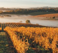 Best 10 Must Visit Vineyards in Australia