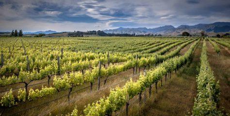 The Neptune School of Wine