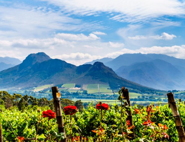 Top 3 South African Wineries to visit